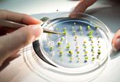 Service Tax - Seed Testing - CBEC Clarifies