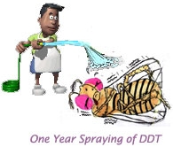 One YEAR of DDT